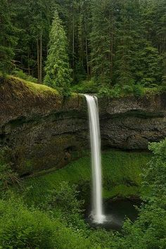 Secret Forests ~ Silverfalls State Park, Oregon