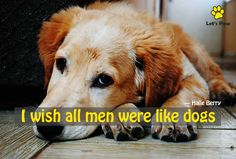 I wish all men were like dogs — Halle Berry