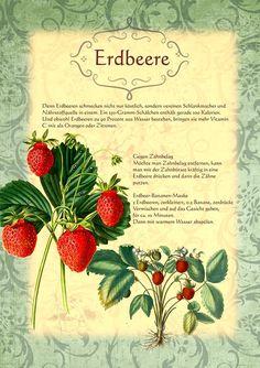 Erdbeere http://www.kraeuter-verzeichnis.de/