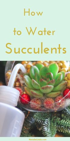 to Water Succulents – the Right Way! Water your succulents the right way and at the right time so it can thrive in your home and garden. Learn the details with this helpful guide!Water your succulents the right way and at the right time so it can thrive How To Water Succulents, Types Of Succulents, Succulents In Containers, Cacti And Succulents, Planting Succulents, Planting Flowers, Propagating Succulents, Flower Plants, Container Flowers