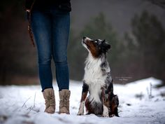 Australien Sheppard and his Human Dog Photography, Riding Boots, Instagram, Dogs, Horse Riding Boots, Pet Dogs, Doggies