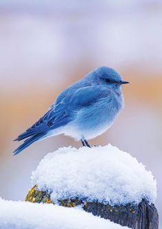 "me-lapislazuli: ""Wyoming - Tierliebe - Cute Birds, Pretty Birds, Beautiful Birds, Animals Beautiful, Cute Animals, Beautiful Images, Exotic Birds, Colorful Birds, Bird Pictures"