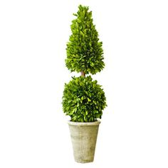 Preserved Boxwood 24 Tiered Topiary
