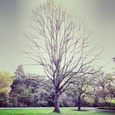 Tree #7340