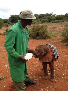 The David Sheldrick Wildlife Trust in Nairobi, Nairobi Elephant Pictures, Elephants Photos, Save The Elephants, Baby Elephants, Adopt An Elephant, Elephant Love, David Sheldrick Wildlife Trust, Biggest Elephant, Elephant Sanctuary