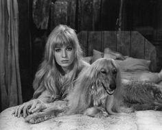 Shaggy hair dos.  Monica Vitti. Afghan hound.