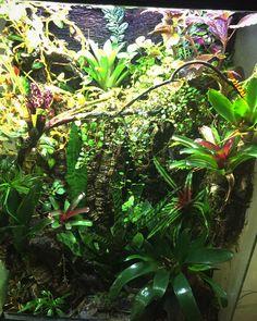 Frog Tank, Dart Frogs, Tanks, Rain, Toad, Rain Fall