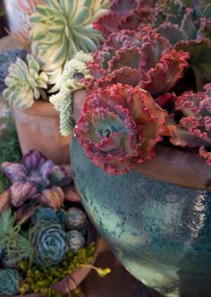 *more gorgeous succulents