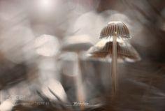 Amber forest by azulsiena. @go4fotos