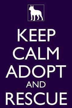 Adopt a shelter animal :)