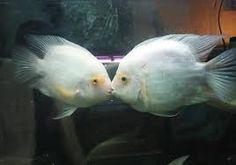 Fishkish <~>