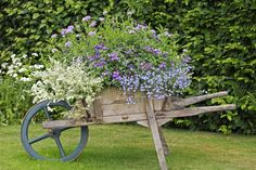 Wooden Wheelbarrow Planter Photographic Print by Dr. Keith Wheeler ...