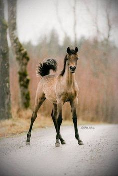 poulain 🐎 foal colt le petit cheval the little horse (collection equus equine) nature animale Baby Horses, Cute Horses, Horse Love, Wild Horses, Draft Horses, Most Beautiful Animals, Beautiful Horses, Beautiful Creatures, Beautiful Babies