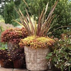 Pots with a Personal Touch: Hypertufa