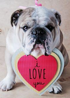 I love you! english bulldog