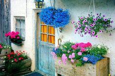 Queridos amigos,   Cada vez gosto mais de flores! tem graça que quando acabei o curso de arquitetura paisagista desenhava tudo muito mini...