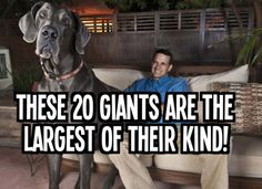 No Photoshop was used here, folks! These freakishly large animals are 100% the real deal. Please SHARE if you can not believe… or don't want to believe… these giants exist!
