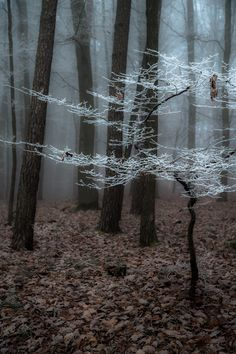 """sapphire1707: """"Frozen Fog II   by Gletscherhorn   http://ift.tt/1wP4vk5 """""""