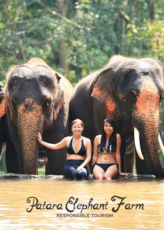 [Responsible Tourism] Be an elephant owner (mahout) for a day! Patara Elephant Farm in Chiang Mai, Thailand is like no other. Try this once-in-a-lifetime experience! | via http://iamaileen.com/patara-elephant-farm-thailand-elephant-owner-mahout-day/ #travel #elephants #Thai