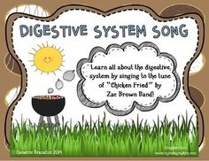 Digestive System Song