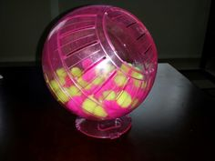 My husband made my sugar gliders a ball pit! -Kelley
