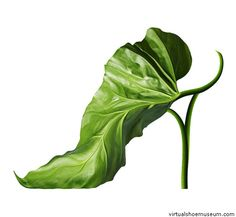 La Premiere  Michel Tcherevkoff    Shoefleur, A Footwear Fantasy. It began with a picture of a leaf I had taken for a client,' says Michel. 'The leaf was turned upside down and I remember saying out loud to no one in particular, 'that leaf looks like a shoe.' And, after a move here and a twist there, I had created my first shoe fleur, appropriately named La Première.'