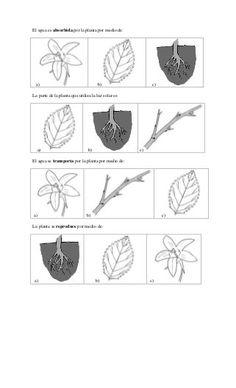 Prueba Ciencias Naturales: Unidad: Las Plantas y Animales. 1 básico Natural, Lol, Primary School, Unity, Science, Plants, Animales, Nature