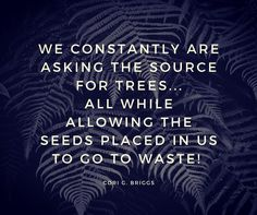 We are constantly asking the source for trees. All while allowing the seeds placed in us to go to waste. Cori G. Instagram Quotes, Instagram Posts, Positive Messages, Powerful Quotes, Proverbs, Philosophy, Life Quotes, Positivity, Motivation