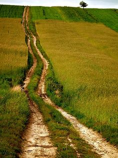 into the wild nature . Beautiful Roads, Forest Road, Wild Nature, Adventure Is Out There, Pathways, Countryside, National Parks, Country Roads, Earth