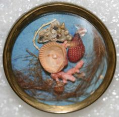 late 18th century habitat button with real shells and a tiny piece of real coral, set under glass, mounted in brass. European, probably French.