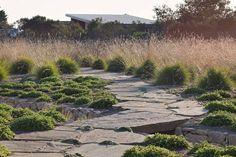 Monterey landscape designer Bernard Trainor creates green dreamscapes of lush grasses, reflective pools, and sculpted terrain amid the drama...