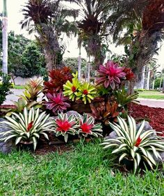 32 flower beds in front of house ideas 20 - Tropical garden design, Front yard garden design, Front yard garden, Florida landscaping, Tropical - Florida Landscaping, Tropical Landscaping, Front Yard Landscaping, Landscaping Ideas, Florida Gardening, Mulch Landscaping, Landscaping Borders, Tropical Backyard, Front Yard Garden Design