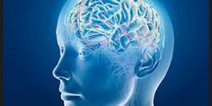 Cómo funciona nuestra memoria y de qué manera podemos detectar el alzheimer