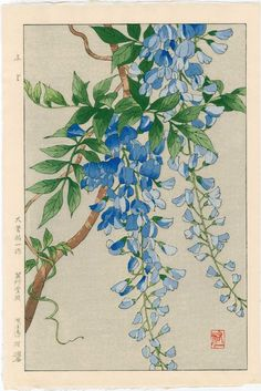 Wisteria by Yuichi Osuga from Shodo Kawarazaki Spring Flower Japanese Woodblock Prints Could be the part that starts to go down my leg Japanese Painting, Chinese Painting, Chinese Art, Art Chinois, Art Japonais, Guache, Japanese Flowers, Japanese Prints, Chinese Prints