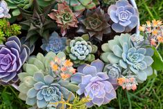 "If your mom enjoys gardening, spend a few hours soaking up the sun and creating succulent gardens together. Find a decorative stone and use a sharpie to write ""I love you"" for a nice final touch."