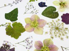 pressed flowers - Google zoeken