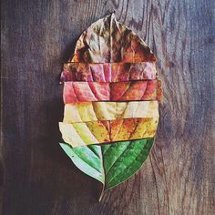 Fall leaves and colors match up. Make puzzles out of fall leaves. Autumn Photography, Creative Photography, Art Photography, Hipster Photography, Minimalist Photography, Landscape Photography, Artsy Photos, Creative Photos, Land Art