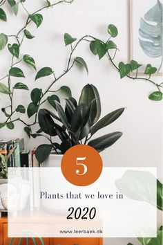 Read about 5 plants from the plant trend 2020 Planters, Green, Plant, Window Boxes, Pot Holders, Flower Planters, Pots