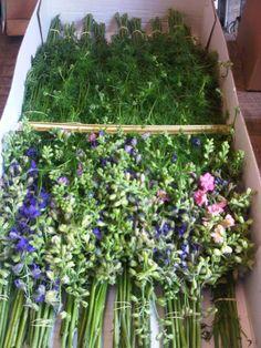 Wholesale British Larkspur  www.flowersbyclowance.co.uk
