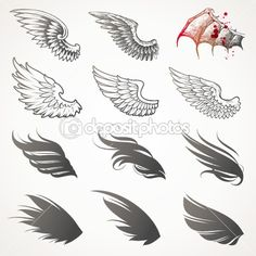 wings + feathers