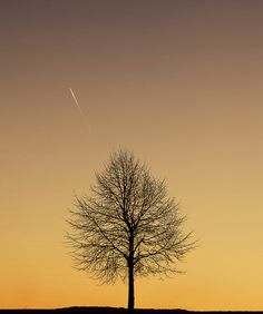 love the delicate structure of the tree against the amazing colour in the background