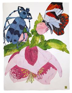 Sarah Graham, artist, botanical works on paper, 2008 to present. Botanical Illustration, Botanical Prints, Digital Illustration, Sarah Graham Artist, Flower Artists, Insect Art, Pastel, Mural Art, Watercolor Flowers