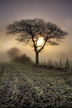Misty Morning, solitude, tree, sun, sunbeams, fiels, fence, beauty of Nature, mysterious, foggy, fog, beautiful, peaceful, photo