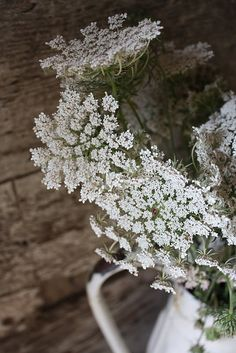 queen anne's lace - cow parsley   via @Christina Childress & Ersfeld