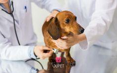 #Lemmikkivakuutus, Valitettavasti lemmikitkin sairastavat tai voivat joutua hullun myrkyttäjän uhriksi. Eläinlääkärissä käynti ei ole halpaa, etenkin jos on tiedossa operaatio. Kuinka moni teistä on vakuuttanut lemmikkinsä, juuri näiden syiden takia? <3