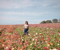 Carlsbad Flower Fields, Vineyard, Couple Photos, Flowers, Outdoor, Ideas, Couple Shots, Outdoors, Florals