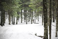 snow and wood <3    #snow #landscape #beautiful #italy