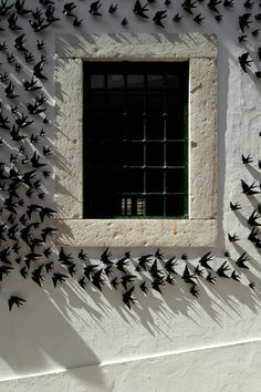 Ceramic swallows covered window, Portugal