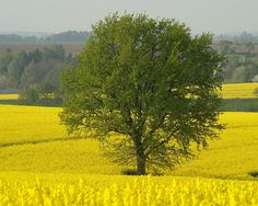 Lovely landscape photos from Webshots