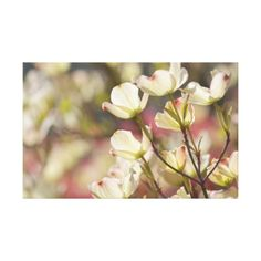 Dogwood Flowers canvas